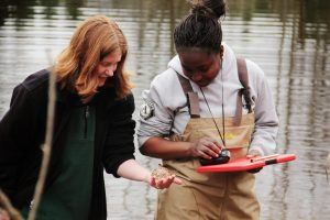 Volunteer in pond looking at egg mass for restoring