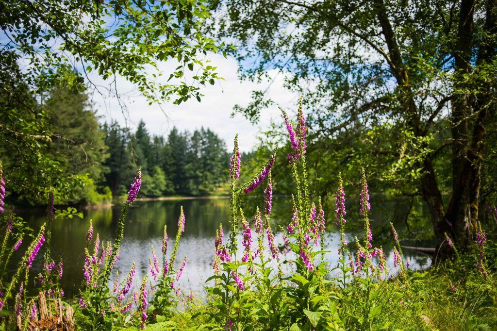 spring lake with flowers