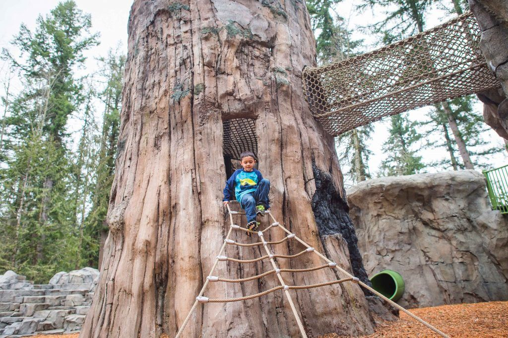 Kid on giant tree rope ladder