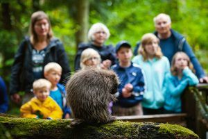 Porcupine and people