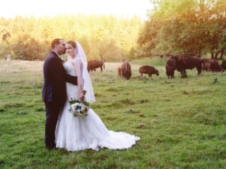 Wedding couple with bison