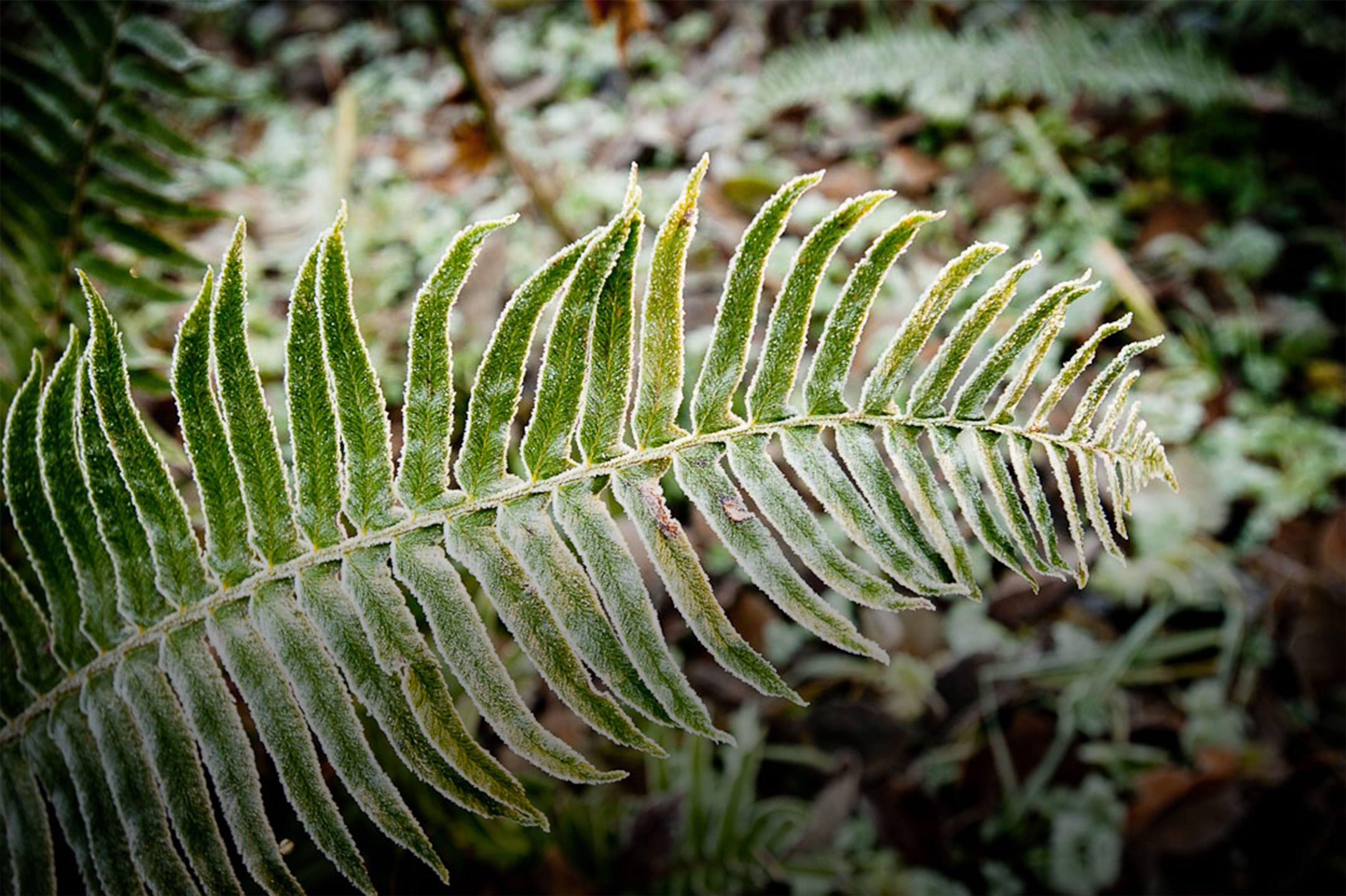 Plants Information About Native Northwest Plants At Northwest Trek