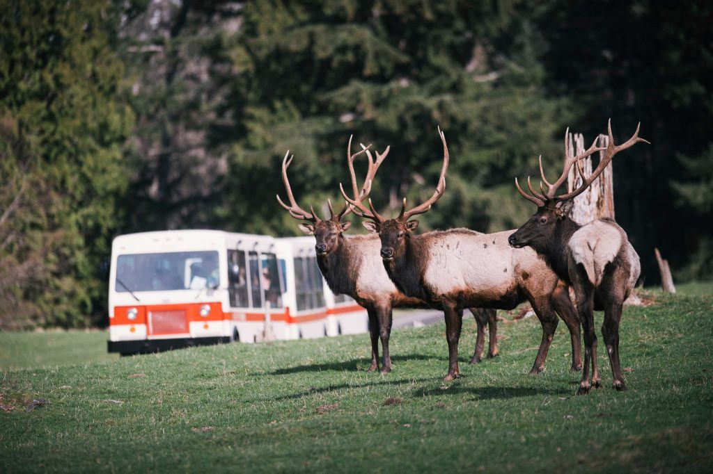 elk with tram best one