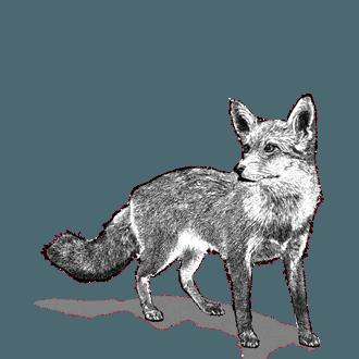RedFox
