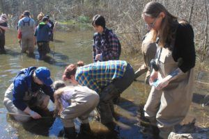 Volunteers at amphibian egg mass training