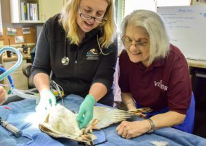 Dr. Allison Case and Doro Oliver at a barn owl exam.