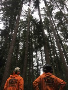 Arborists looking at trees