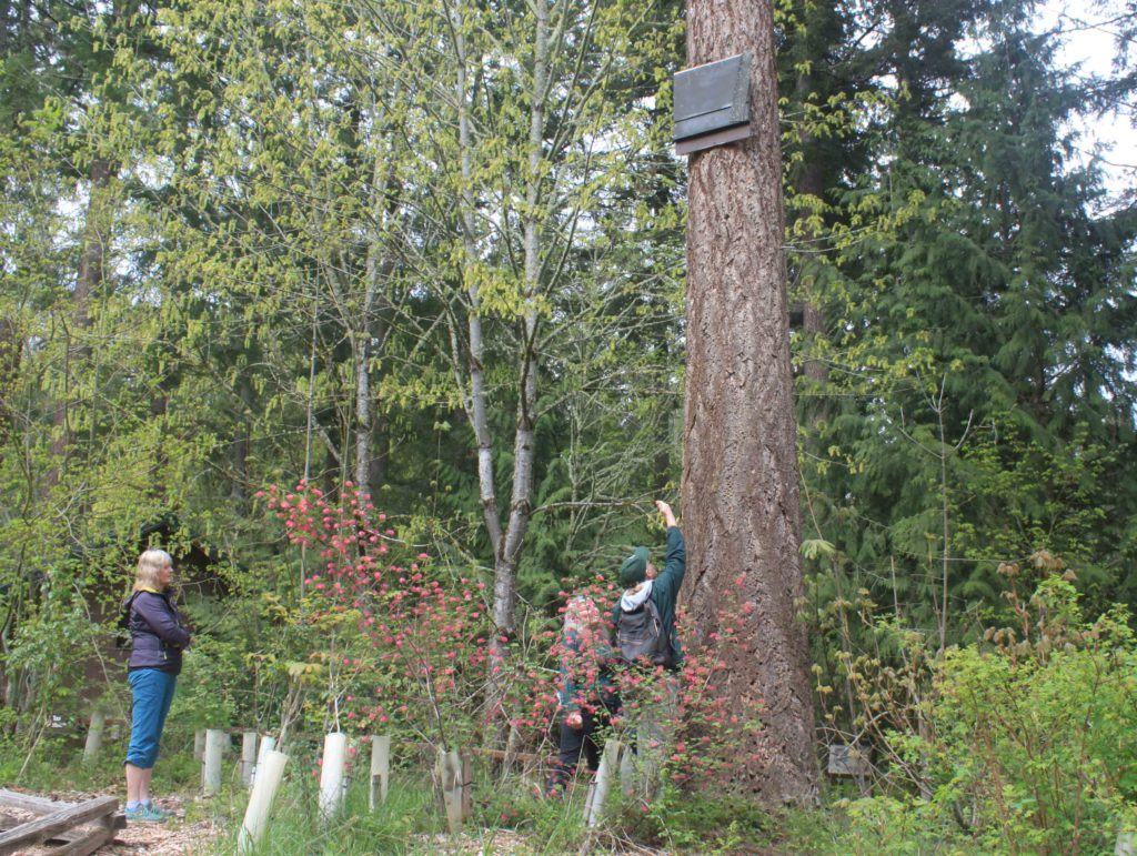Trek staff looking at bat box in tree.