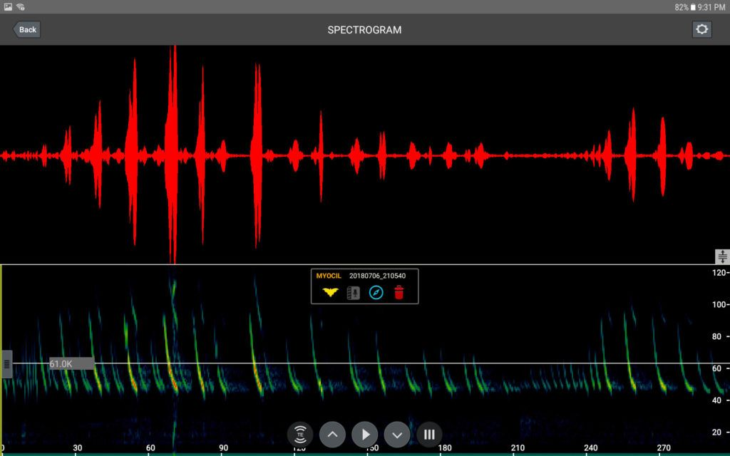 Bat call spectrogram
