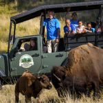 Keeper Adventure Tour with two bison