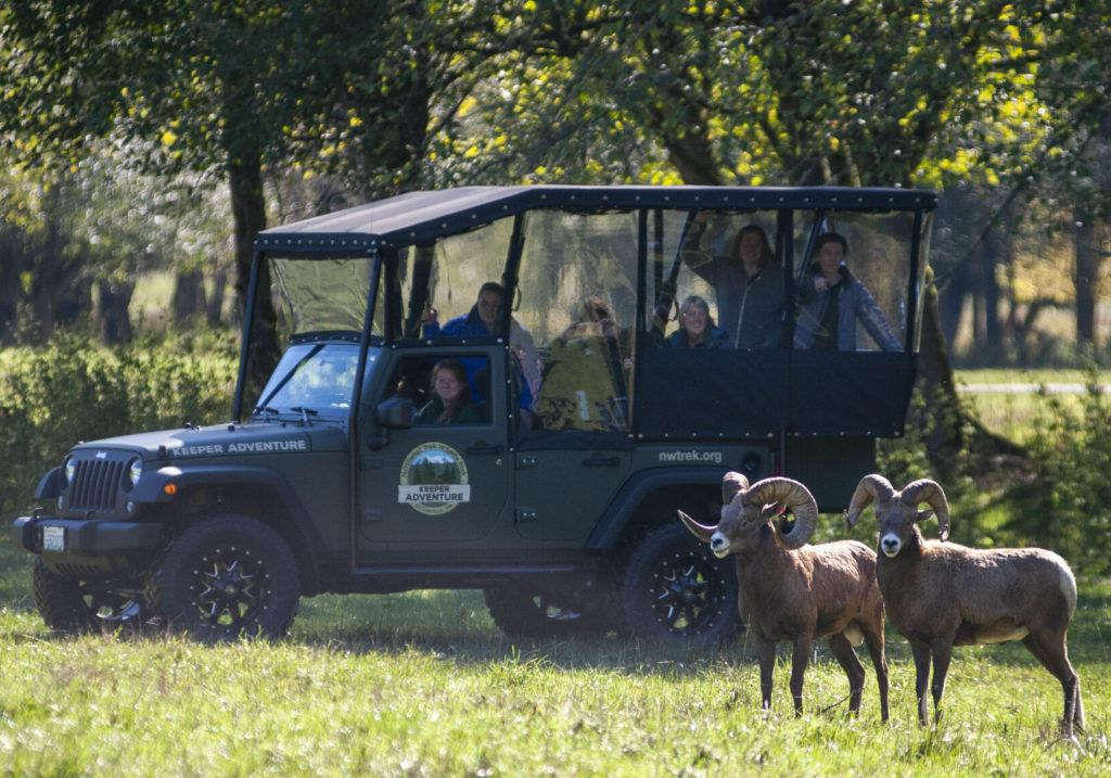 Keeper adventure tour in fall with sheep