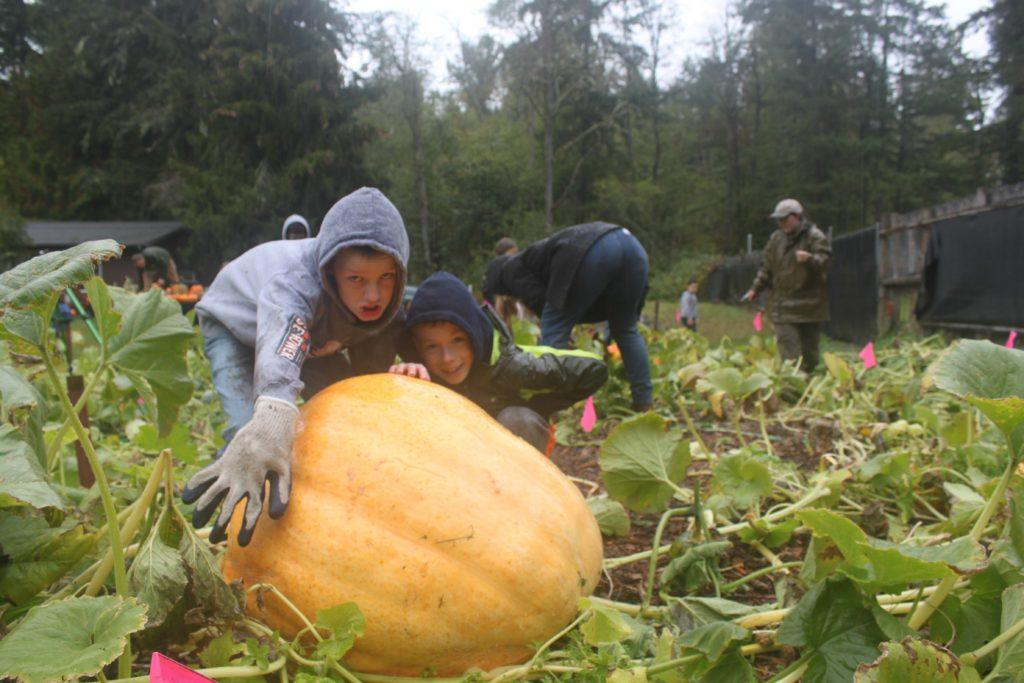The biggest pumpkin in the patch - around 100lb.