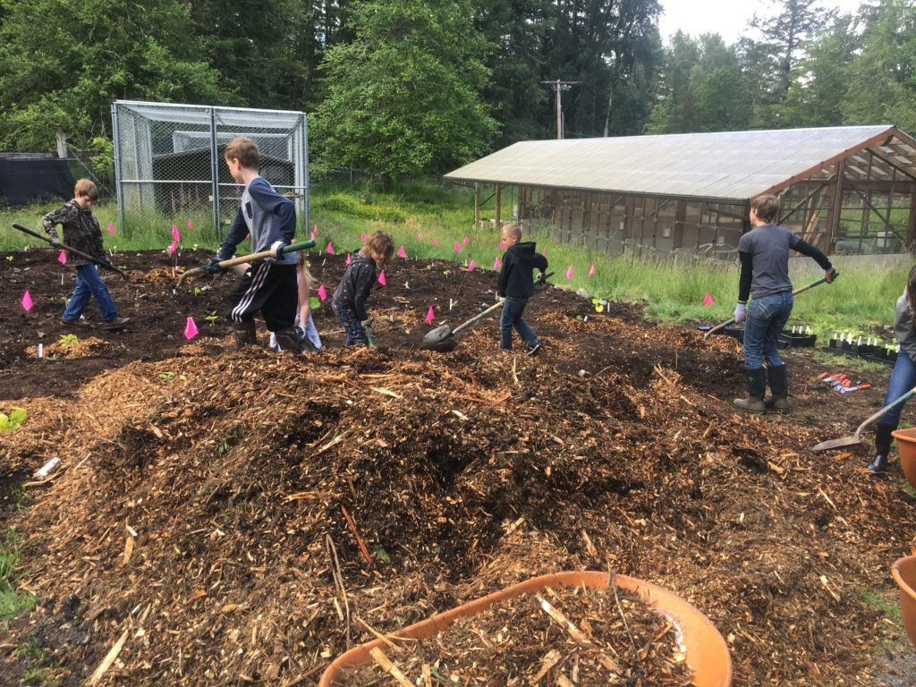 Weyerhaeuser E.S. students mulch in their pumpkin starts in June.