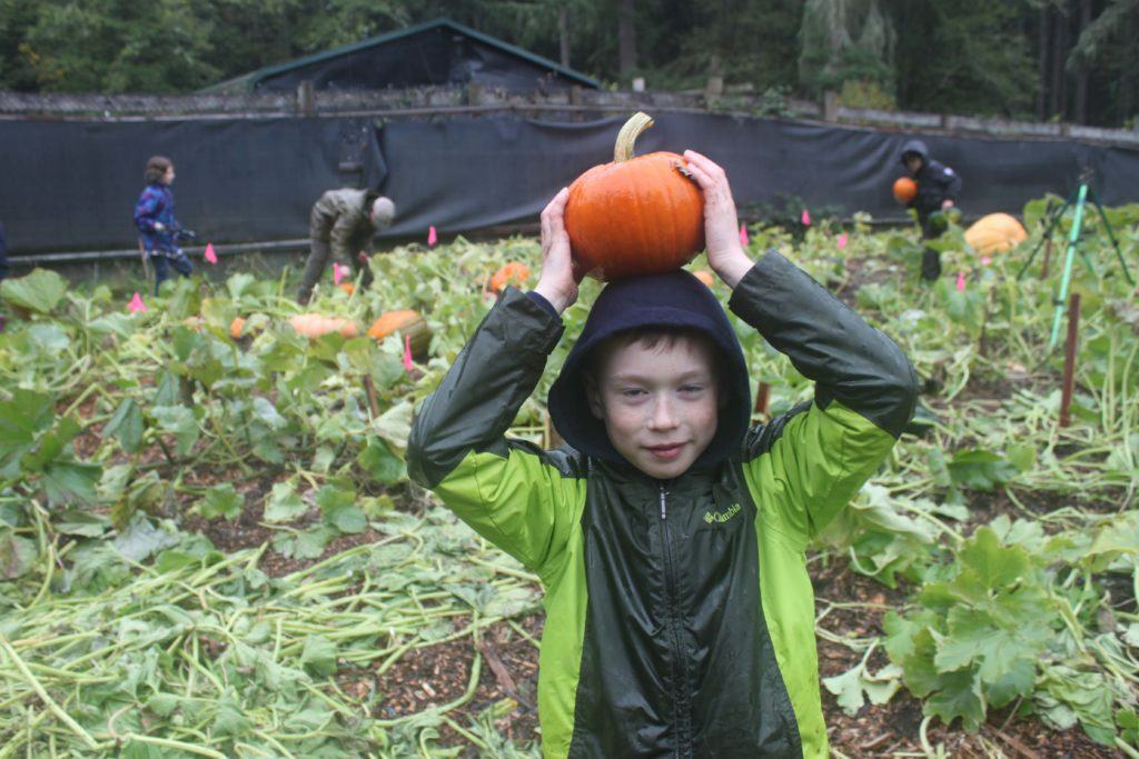 Weyerhaeuser student Blake Pool has fun harvesting pumpkins he helped grow at Northwest Trek with his class.