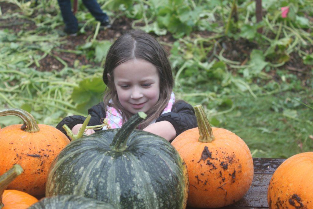 A Weyerhaueser student helps harvest pumpkins for animals.