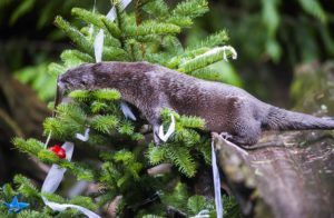 Otter and tree at Winter Wildland