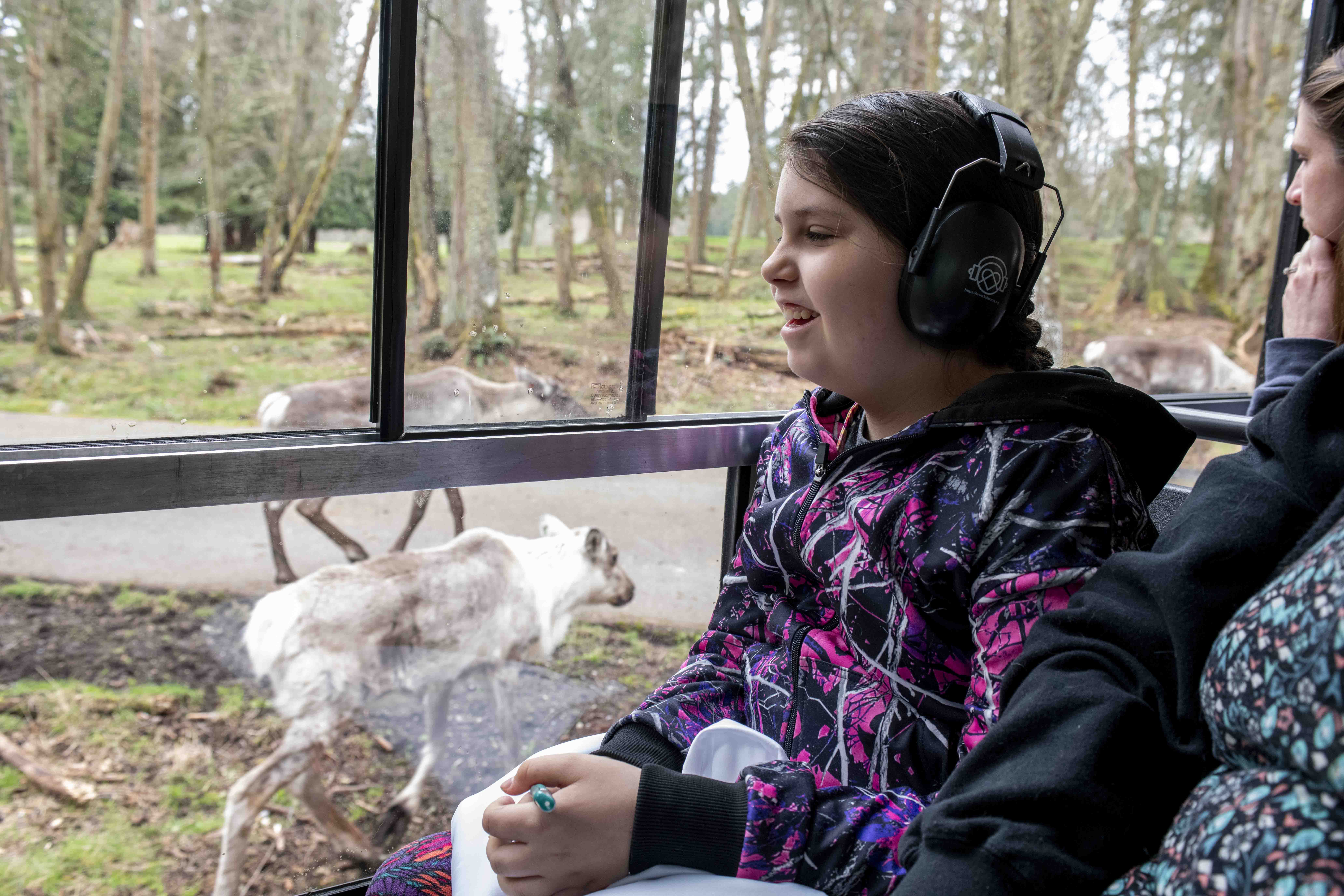 girl at tram window and caribou