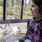 sensory girl with caribou on tram