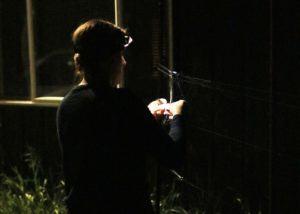 woman releasing bat at night