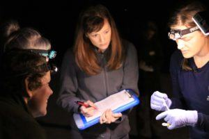 four scientists studying a bat