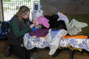 veterinarian and bear in exam