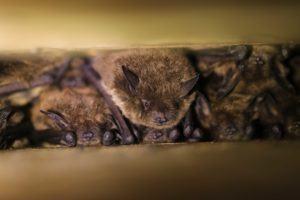 bats in roost