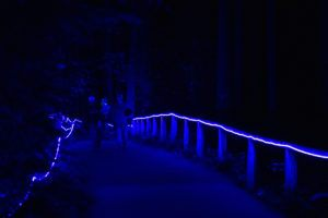 blue light path in dark