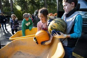 kids loading pumpkins into wheelbarrows
