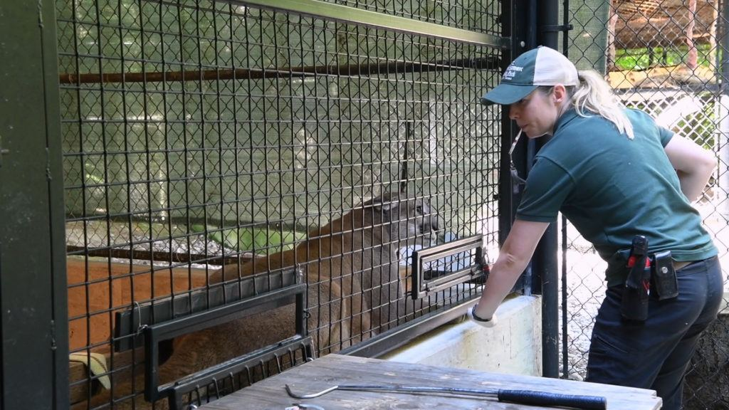 Carly cougar Training