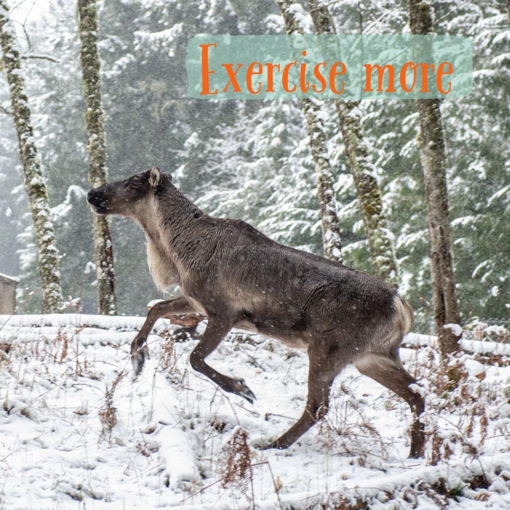 caribou runs through snow