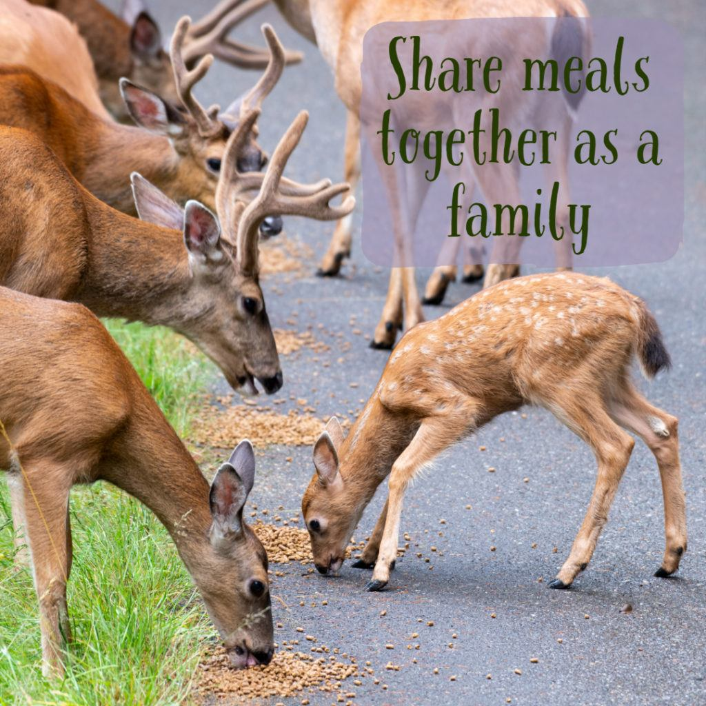 deer and fawn eating