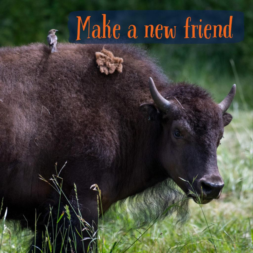 bird sits on top of bison