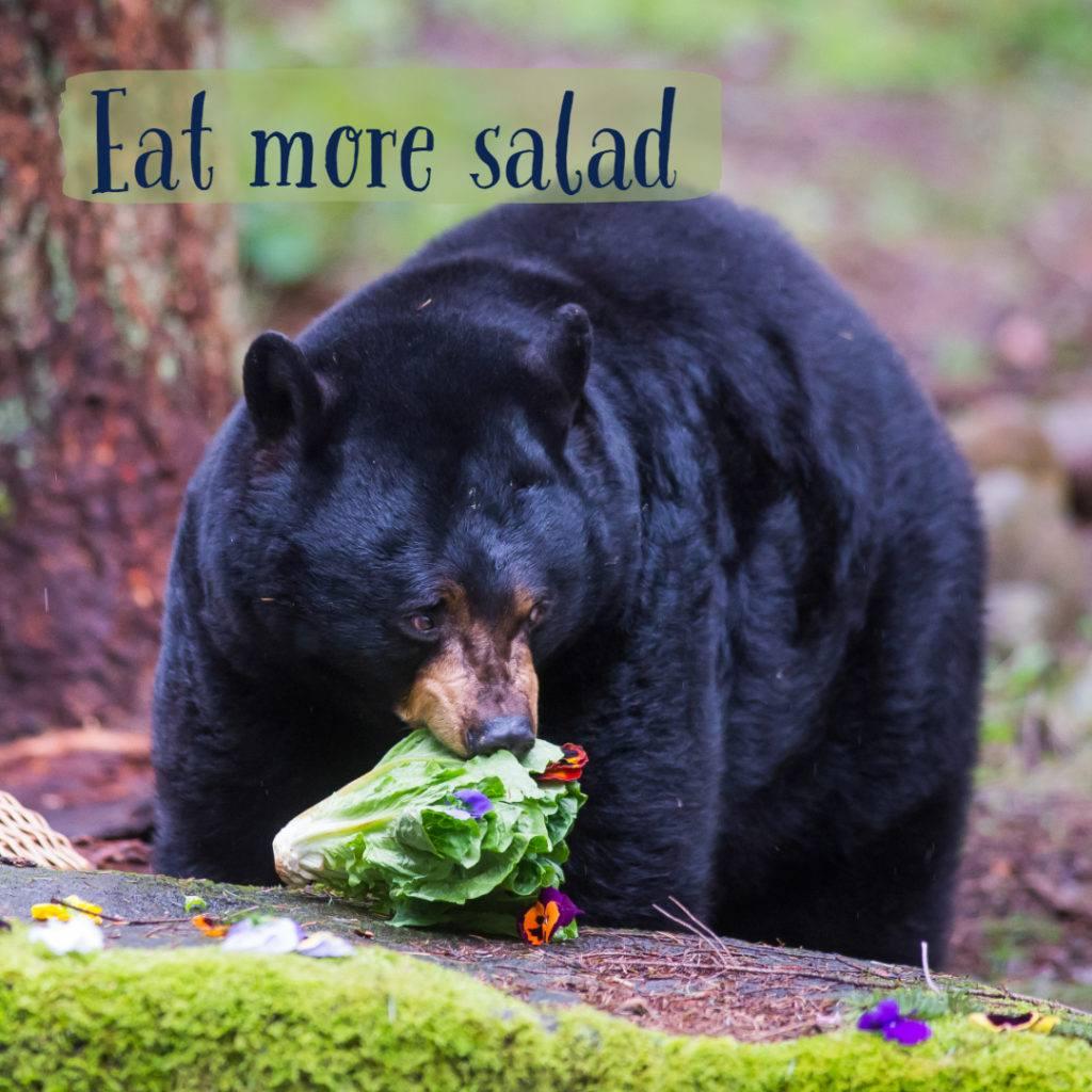 black bear eating lettuce