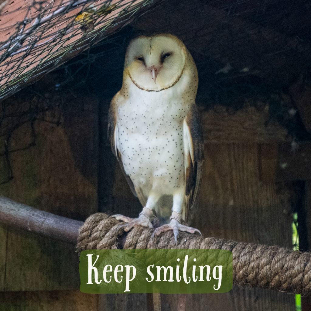 owl appears to be smiling