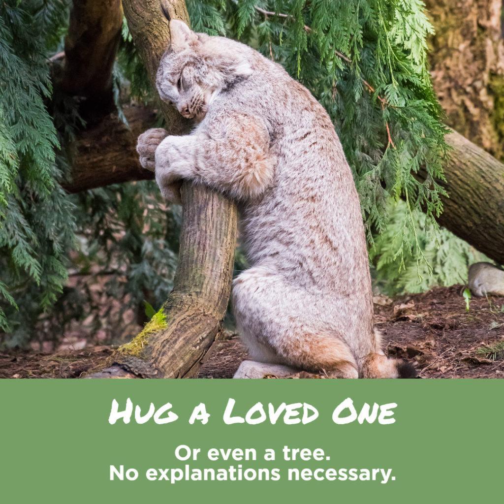 lynx hugging tree