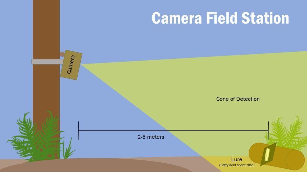 camera trap graphic