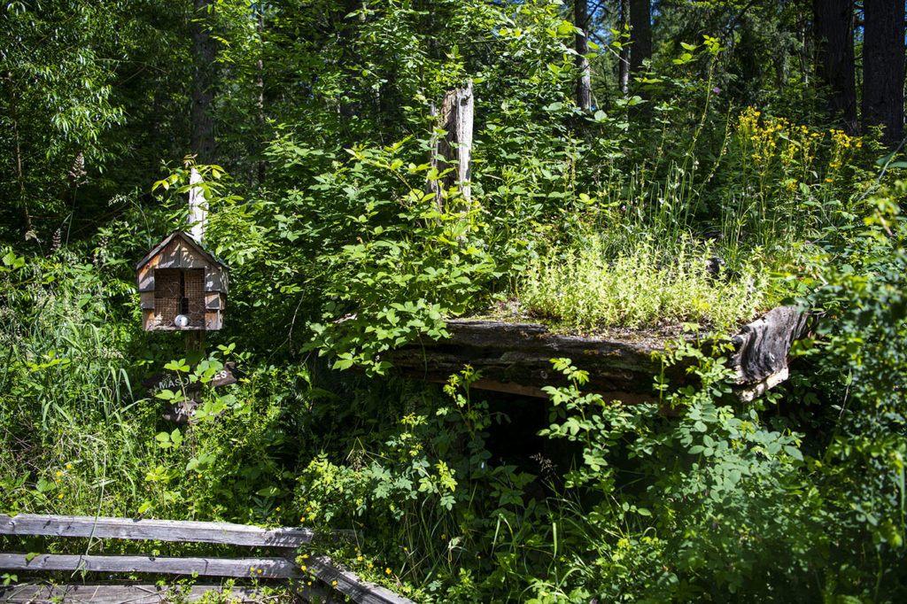 Mason bee hotel & garden
