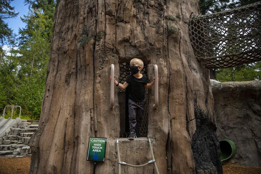 kids trek boy in tree