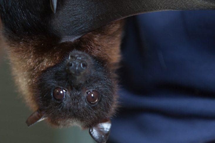 bat face upside down