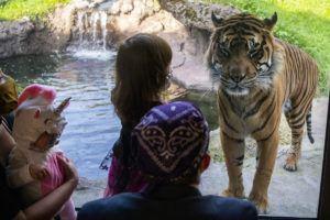 kids in masks tiger