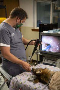 wolf endoscopy