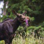 willow moose with flowers