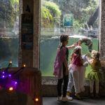 kids in costume near otters