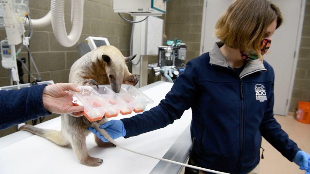 Zoo vet Kadie Anderson