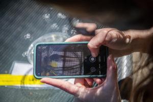 phone measuring leopard frog