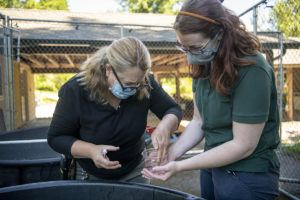 veterinarian and keeper treating leopard frog