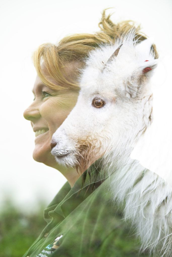 double exposed photo of keeper with mountain goat