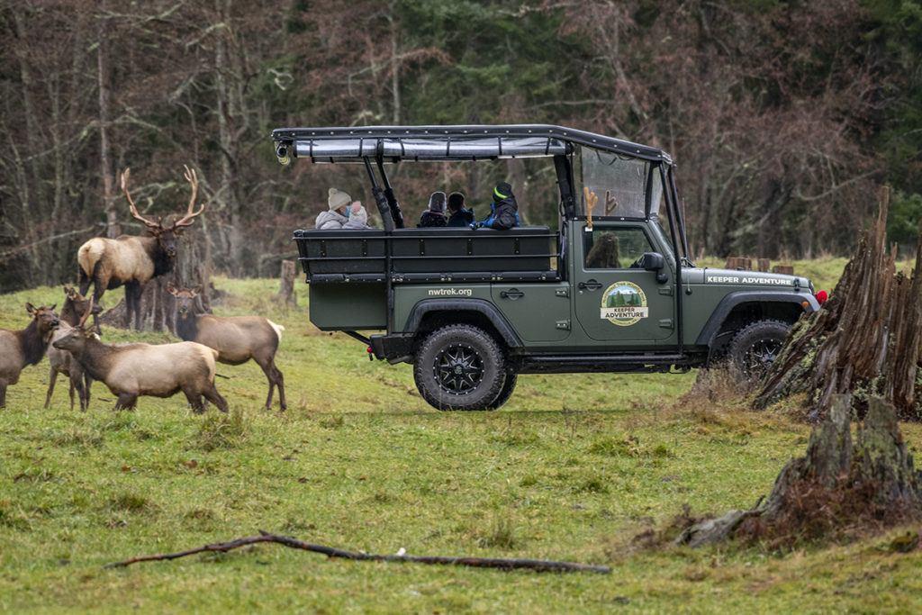keeper Jeep elk