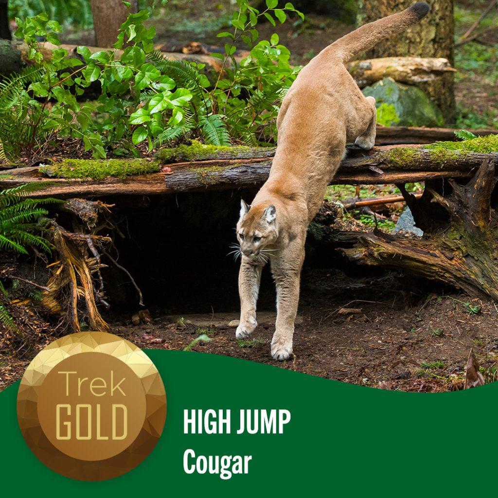high jump cougar