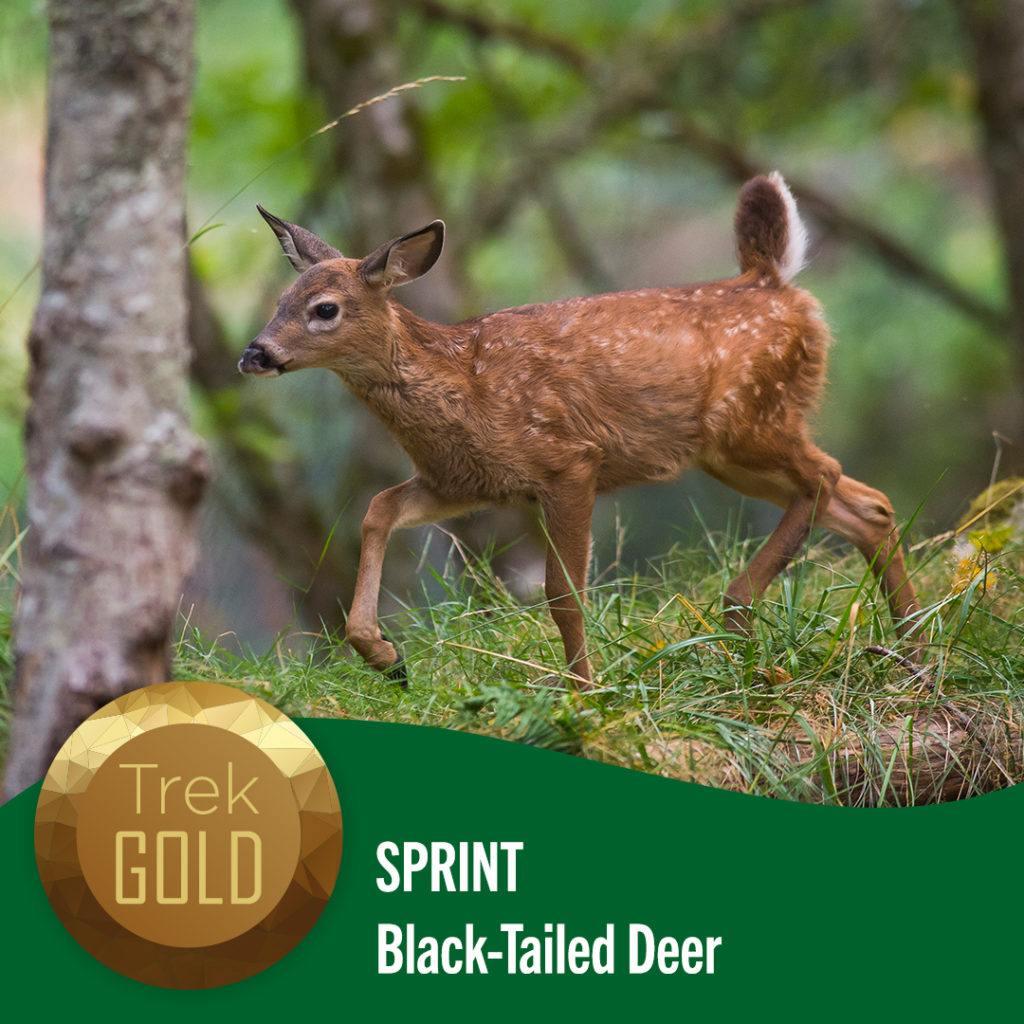 sprint deer